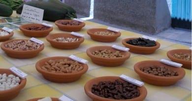 banco de semillas