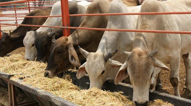 venta carne precio justo