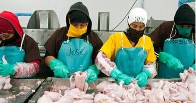 industria avicola pañales